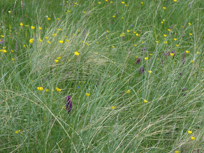 Wild flowers and grasses, green, yellow and purple