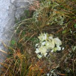 A ptarmigan's nest from this spring
