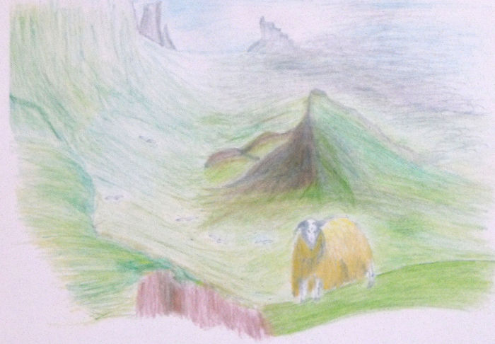 A pencil sketch of a Blackface sheep taken high on a crag on the Isle of Skye