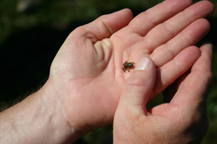 A very tiny new frog