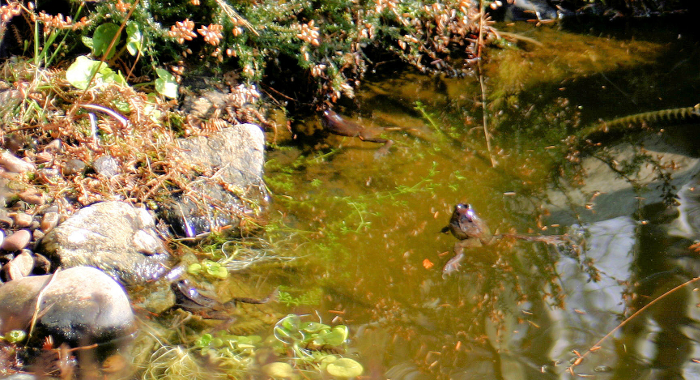 And also in the fish pond
