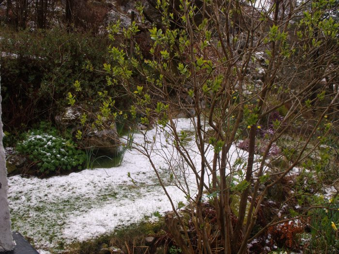 Lambing snow in the garden