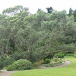 Photo 7 from Inverewe Gardens