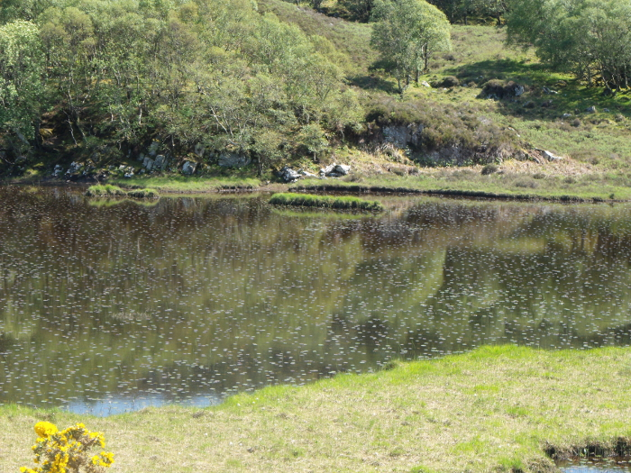 Reflections among the water lilies in the School Loch