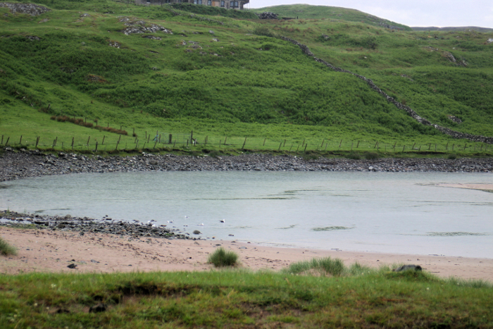 The beach at Clashnessie seems to attract gulls - these are black-back gulls