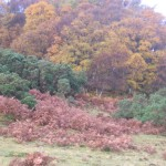 The bracken didn't show up quite so coppery in this light, but it is still a lovely shade of brown