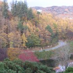 The larches especially were a lovely colour which I would call 'burnt umber'