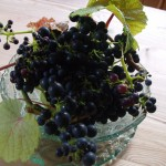...but this year, they produced some delicious grapes for the first time!